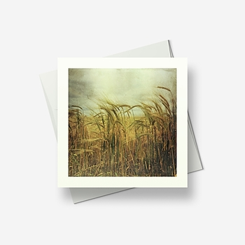 Fields of gold - Greetings card