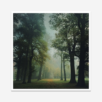 Misty tree avenue - Print