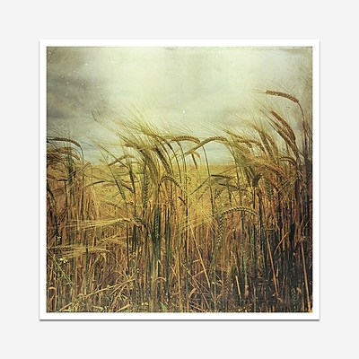 Fields of gold - Print