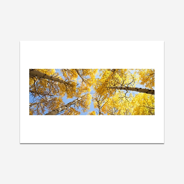 The forest of Yosemite - Print