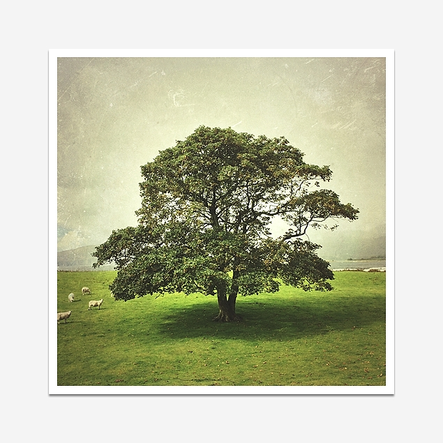 The lonely tree - Print